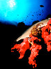 More Underwater Photography : Red sponge and coral.